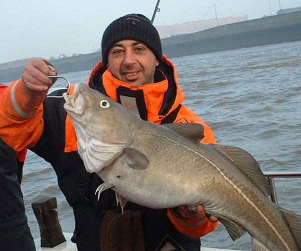 http://www.tuskarcharters.co.uk/media/anglinggall/FAT COD.jpg